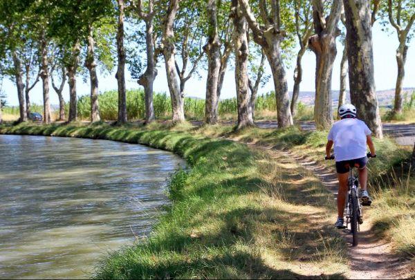 Platanen am Canal du Midi