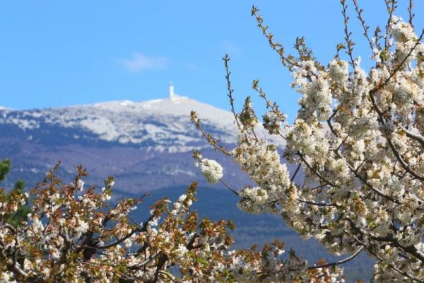 Mont-Ventoux-Die schönsten Radtouren des Vaucluse