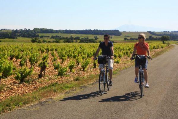 Durch die Weinberge von Châteauneuf-du-Pape