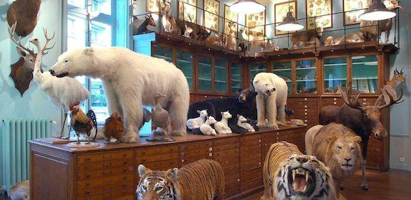 Paris-mit-Kinder Tiere Kabinett Deyrolle