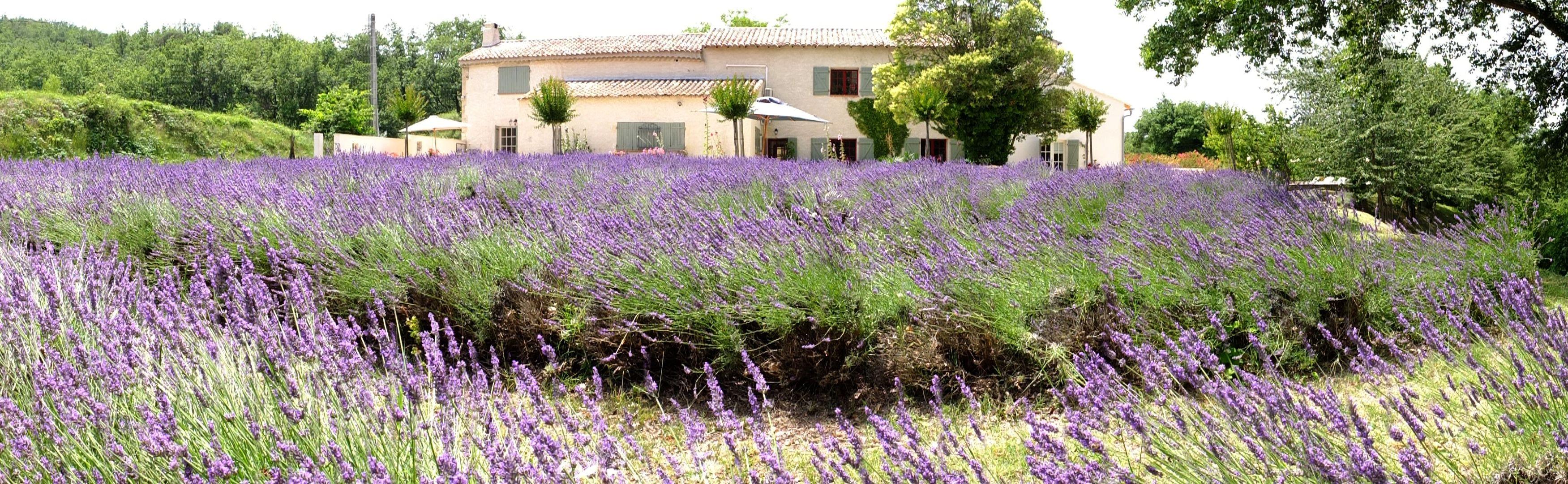 Charmehotel inmitten Lavendelfelder in Südfrankreich