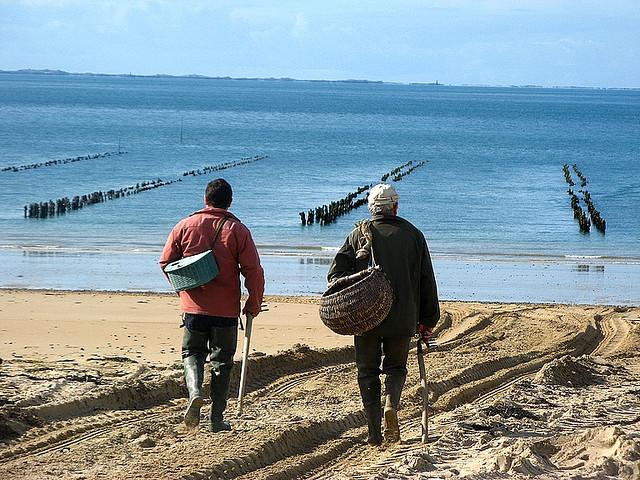 Austernzüchter aus der Normandie