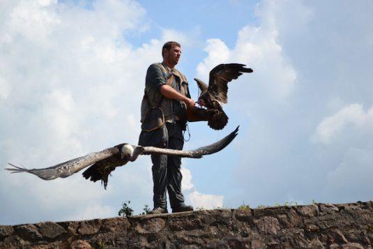 Volerie des Aigles - AdlerPark