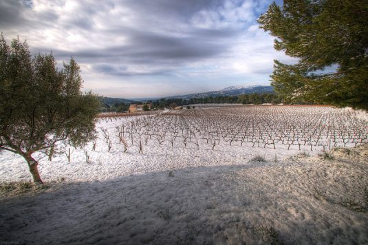 verschneite Weinberge in der Provence