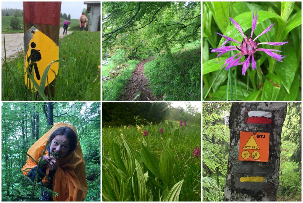 Im Rausch der Natur Les Monts du Jura