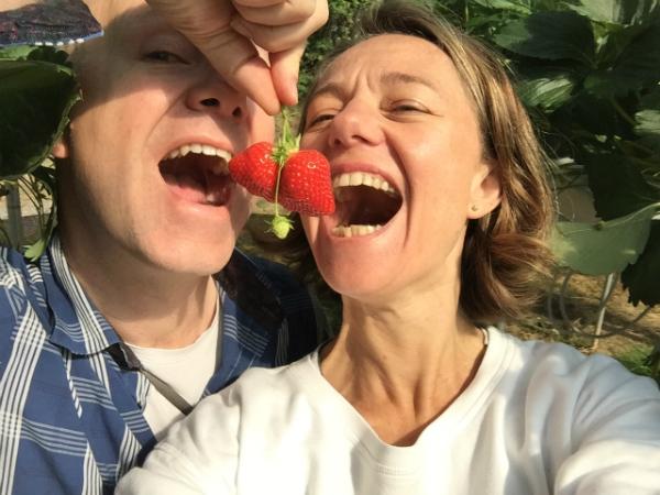 Erdbeeren pflücken in La Fraiseraie in Pornic
