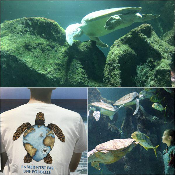 Meeresschildkröten La Rochelle Aquarium
