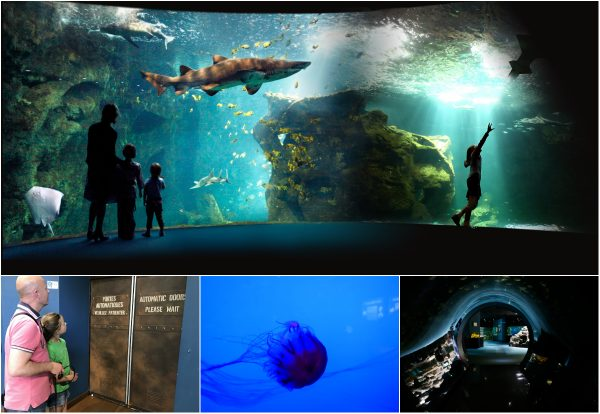 Unterwassergrotte La Rochelle Aquarium