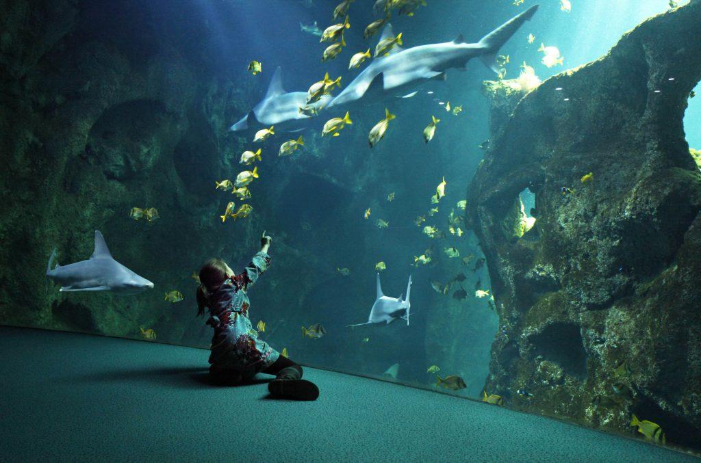 Aquarium von La Rochelle an der Atlantikküste