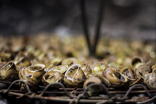 Cargolade: Auf Holzfeuer gegrillte Schnecken