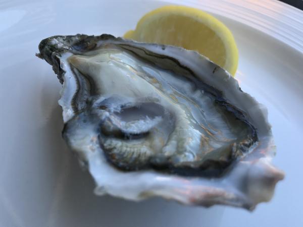 eine frische Austern aus Frankreich