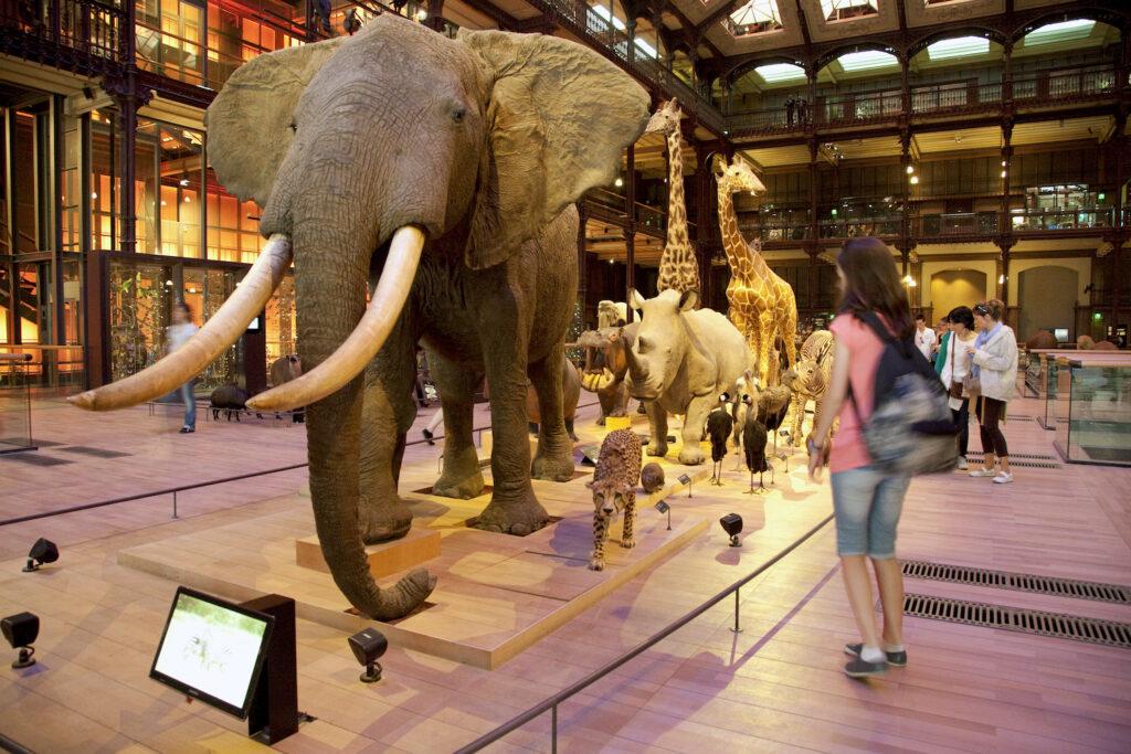 Galerie de l'évolution Paris