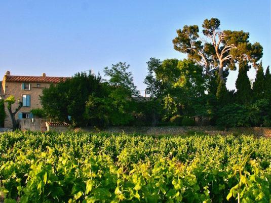 Das Minervois - Vignes de Centeilles
