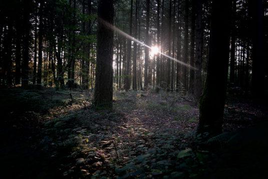 Bretagne Wald Von Brocéliande