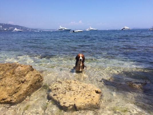 Tagestour Insel Sainte Marguerite Côte d'Azur Hunde