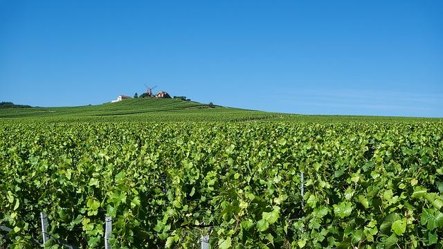 Weinberge und Champagnerhäuser in der Champagne