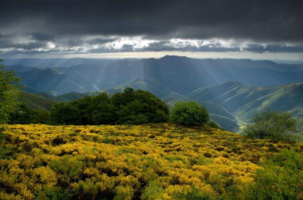Naturgebiete der Causses und Cevennen