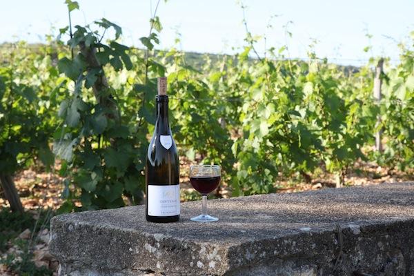Die Weinberge im Burgund Côte d'Or