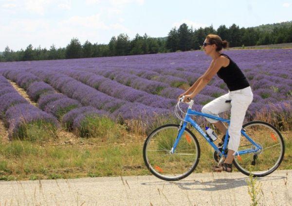 Lavendelfelder Radfahren Vaucluse Frankreich