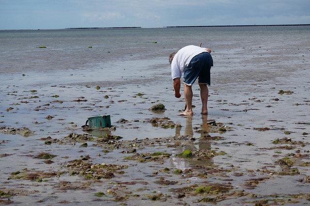 Noirmoutiers pêche à pieds