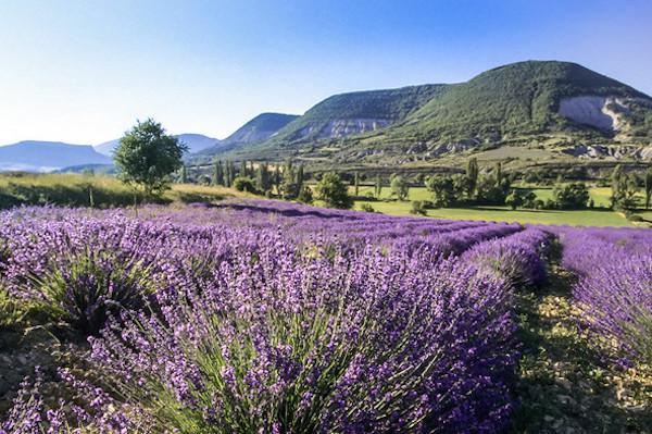 Drôme Tipps Lavendelfelder