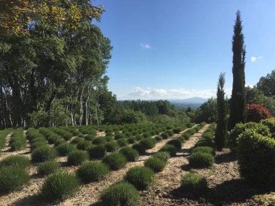 Bois des Dames BB Provence