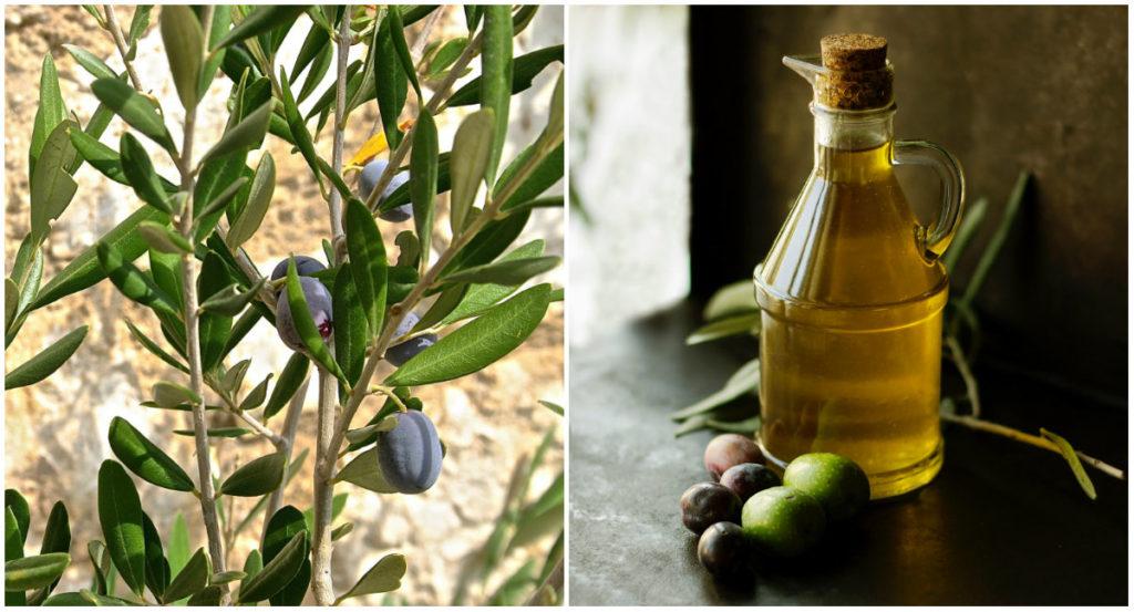 Olivenöl für die Haut