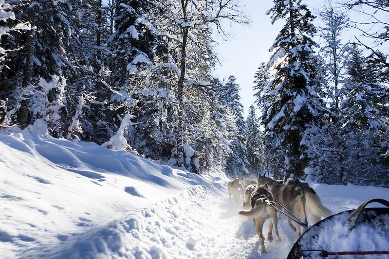 Schlittenhundefahrten Vercors inspiration