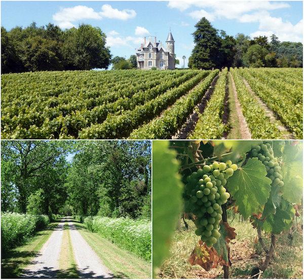 Gesicht Chateau Bedruriere Vendée