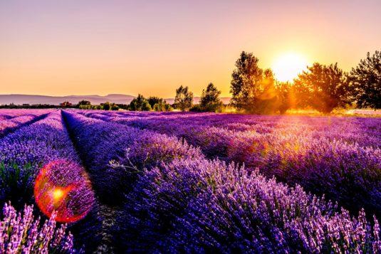 Lavendelfeldern Provence