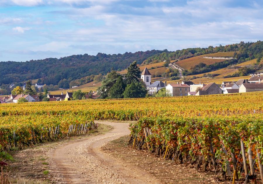 Weindorf Morey Saint Denis Bourgogne