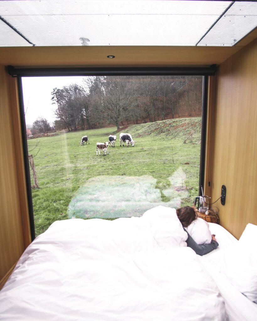 Kühe-im-Schlafzimmer